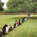 Cani in fila disciplinatamente